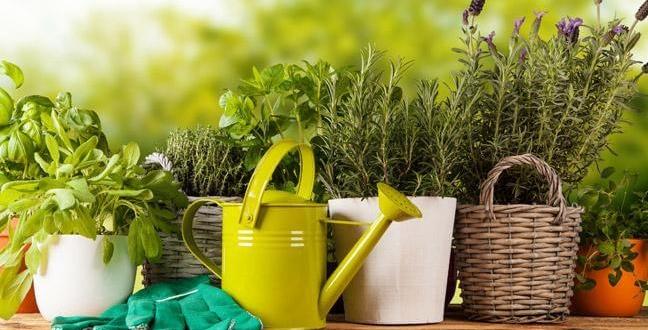 Sănătate din grădina ta
